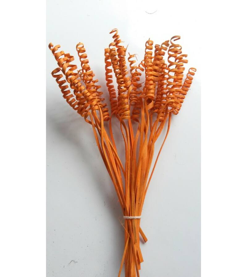 Cane Spring-Vil. Narancs