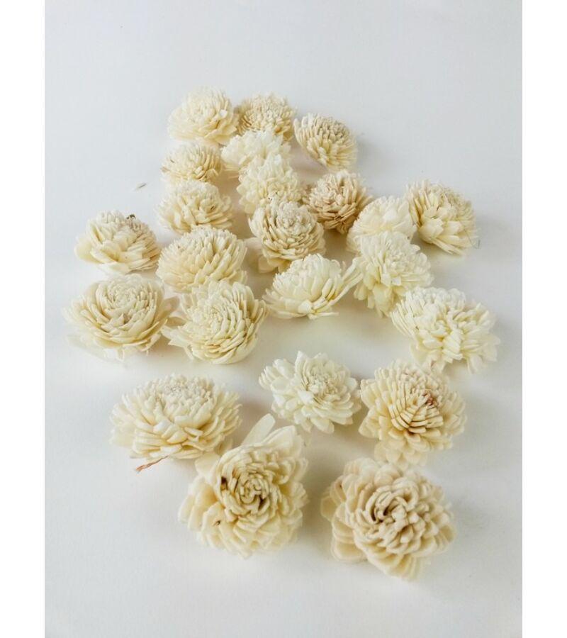 Shola zinnia virág - Fehér
